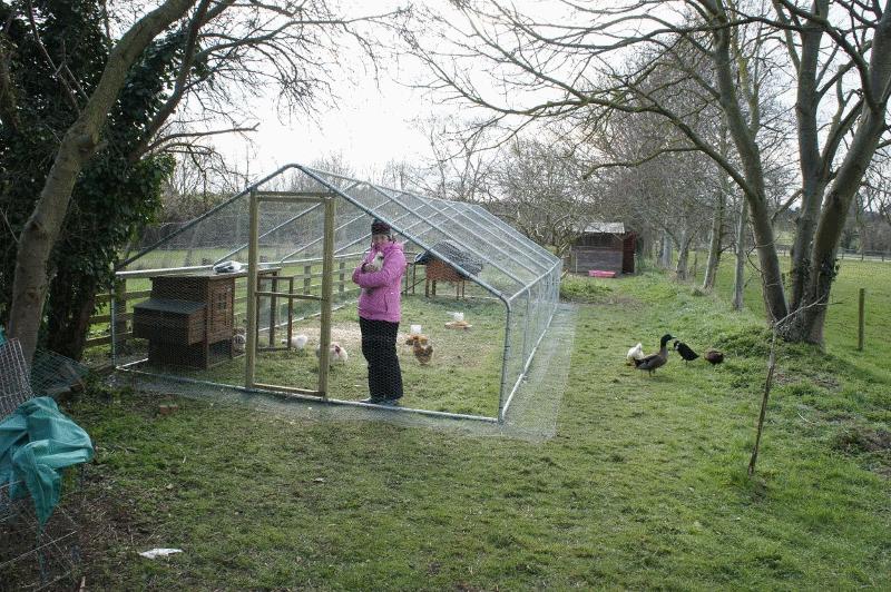 gardenlife chicken run gallery image 14