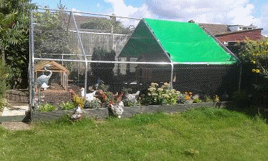 gardenlife chicken run gallery with cover