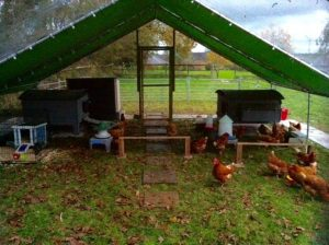 6x8m walk in chicken run